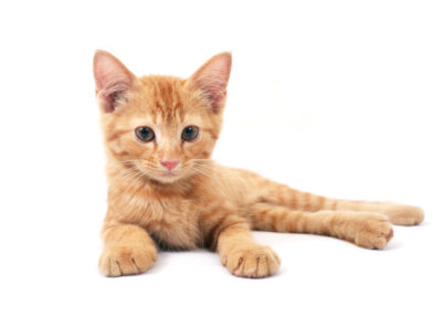 Cat Health, Common cat health problems, cat arthritis, older cats, sick cat, cat coat,