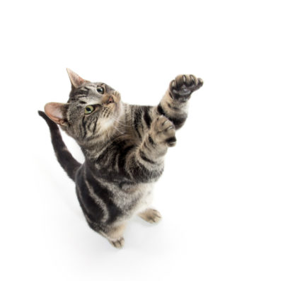 cat health, cat flu, cat arthritis, older cats