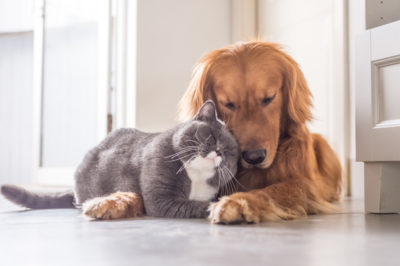 Cats Nutrition and Dog Nutrition