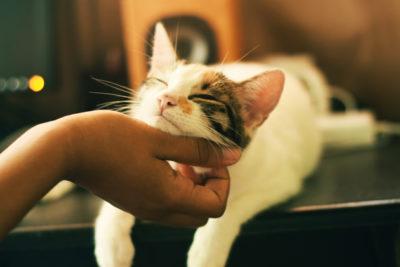 cat flu, cat flu treatment, treating cat flu, how long does cat flu last